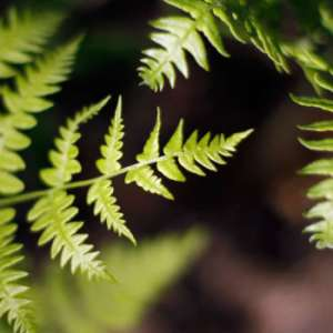 Friends of Indiana Dunes Plant Sale