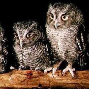 CANCELED Birding with Indiana Audubon Society