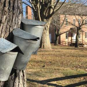 Maple Syrup Time at Deep River