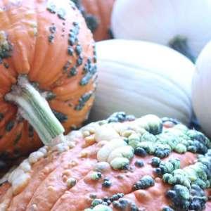 Pumpkin Fun Farm Weekend