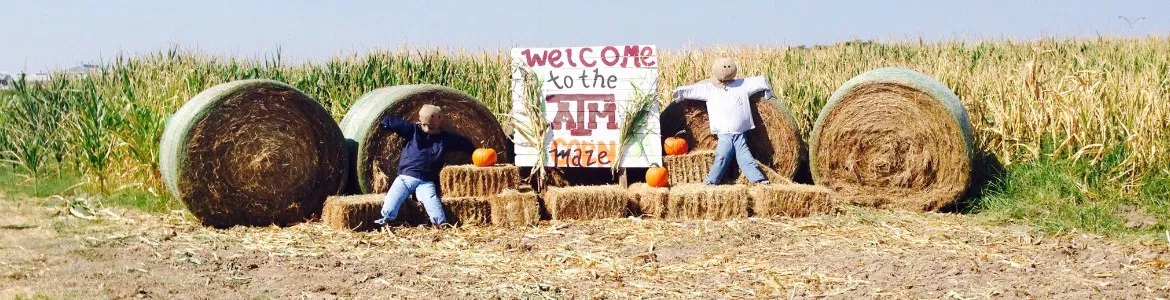 College Station TAMU Corn Maze and hay bales