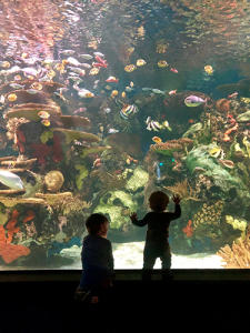 Ripley's Aquarium with kids