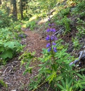 Lowder Mountain Purple Wildflower