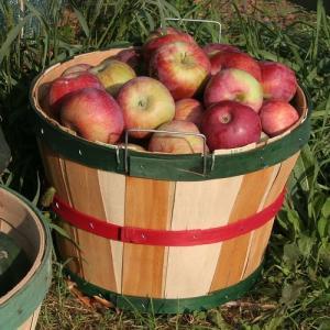 crooked-run-orchard