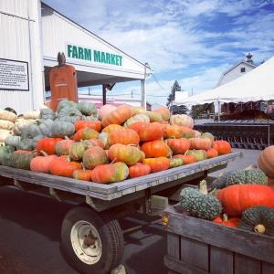 Hubers Farm Market Pumpkins