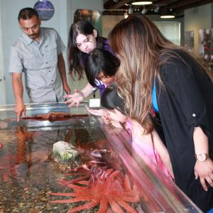 MaST Center Family Looking into a Touch Tank filled with Starfish