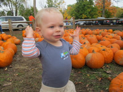little boy at the pumpkin patch in Rochester, NY