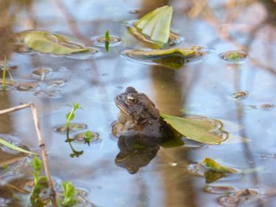 Ashland Nature Center - Frog