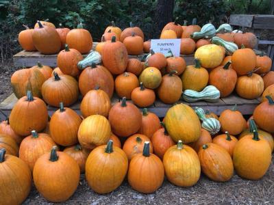 Botanic Garden Pumpkins