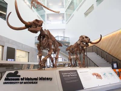 U-M Natural History Museum