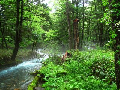 Forest Bathing stock photo