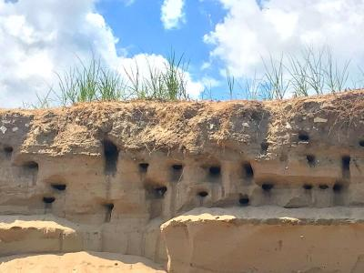 2019 Sand Dune bird holes - photo contest winner Jen Sepanski