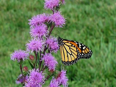 Plant w butterfly
