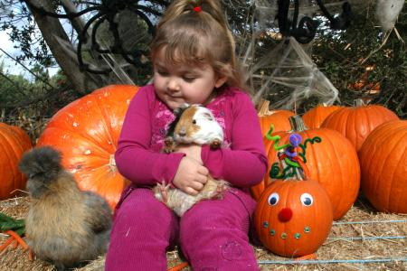 Zoomars Pumpkinpalooza has friendly animals and pumpkins galore--the perfect recipe for a day of family fun!