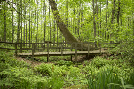 Reynolds Nature Preserve bridge