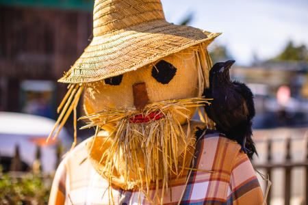 Straw scarecrow with black crow on shoulder
