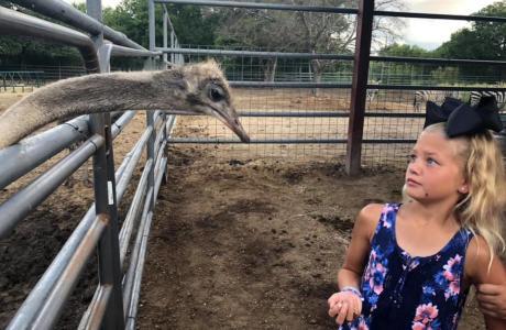 Kingdom Zoo