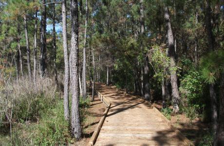 The Sundew Trail