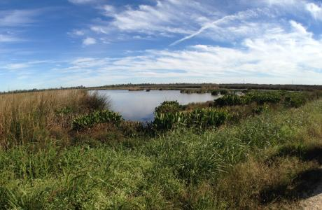 Cattail Marsh Wetlands