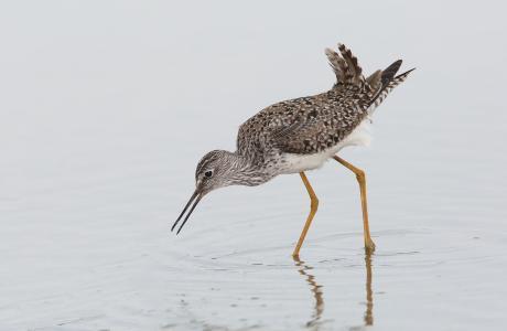 Cattail Marsh Birding