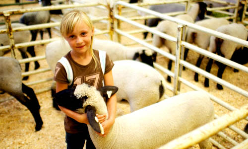 8 Things To Do at the Utah County Fair