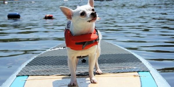 Dog Friendly Poconos | Read Articles & Find Hotels & Attractions
