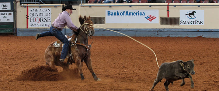 Cowboy Roping at Calf at Rodeo
