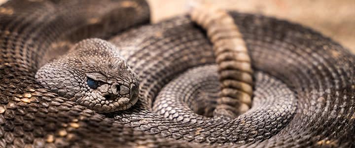 OKC Rattlesnake Museum