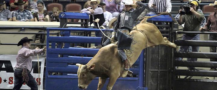 Bull riding - State Fair