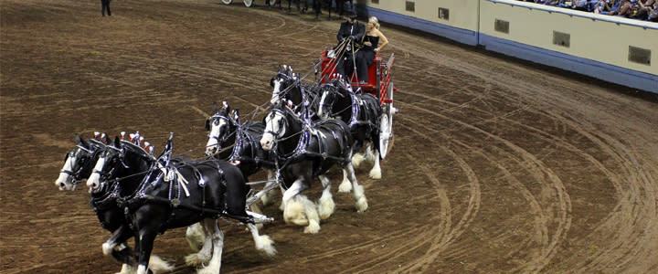 State fair - horses