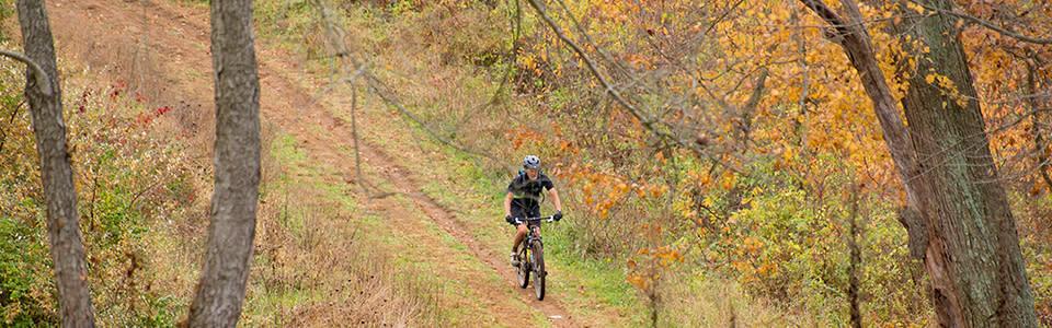 Mountain Biker on Bradywine Trail