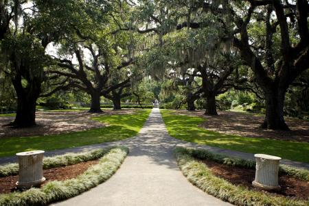 Brookgreen Gardens Oak Allee