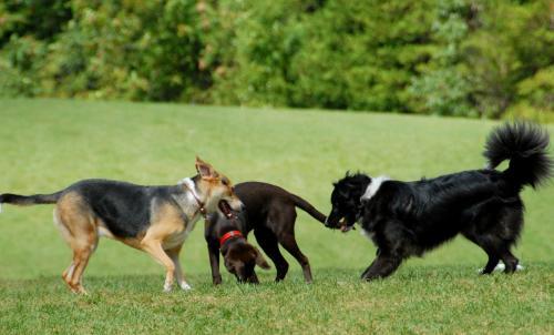 Preserve Dog Park