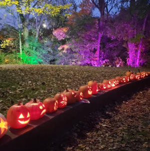 Jack O'Lanterns light up the night the day after Halloween in Ypsilanti's Frog Island Park