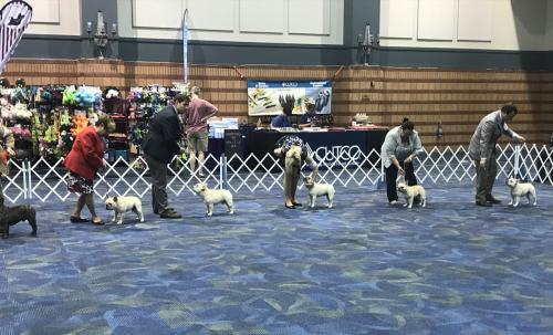 Lagniappe Dog Show