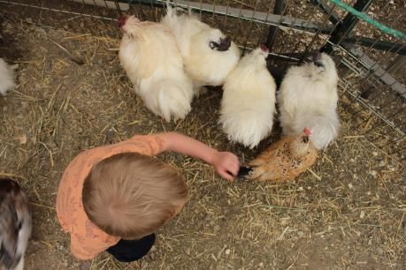 Petting Zoo at Morden Corn & Apple Festival, Manitoba
