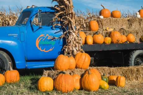 Pumpkin Patch Opening Day