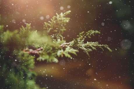 Christmas in Kalona