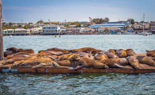 Sea Lion Dock
