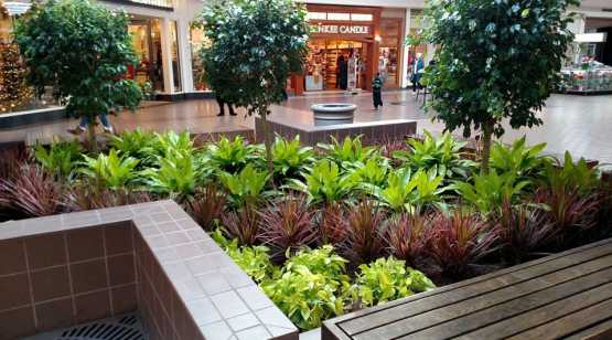 Capital InteriorScapes mall planting