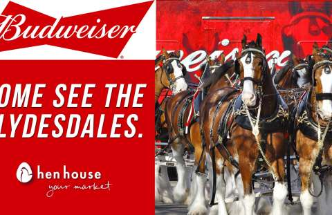 Budweiser Clydesdales in Overland Park