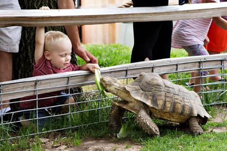 Turtle - Hutchinson Zoo