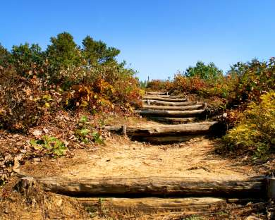 Discover the Pine Bush