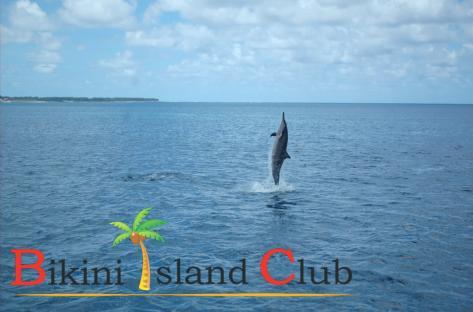 Bikini Island Club pic3