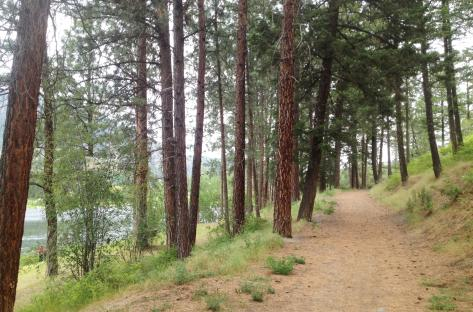 Shannon Lake Regional Park 2