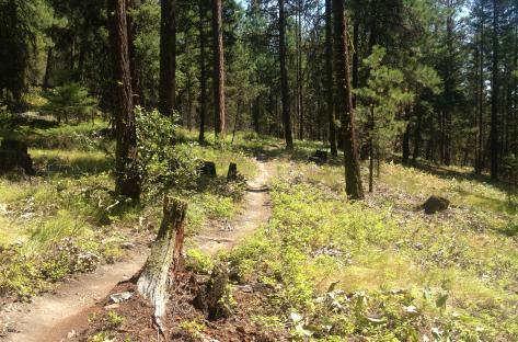 Smith Creek Trails 2