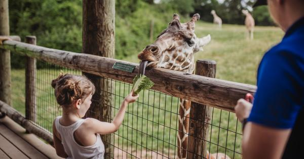 Little girl feeding at giraffe at the Fort Wayne Children's Zoo in Fort Wayne, Indiana