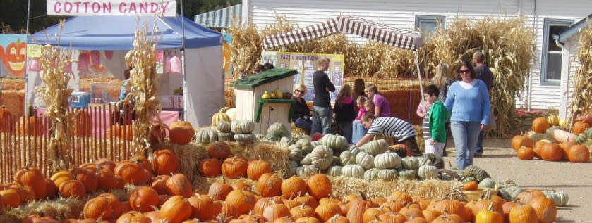 Families picking out pumpkins in Rocky Mountain Pumpkin Ranch
