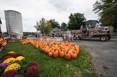 Pumpkins and tractor