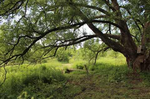 Callahan Trail Big Willow